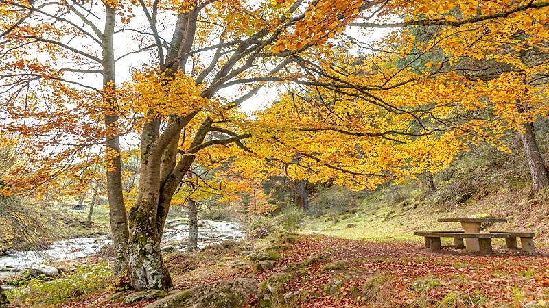 El otoño en la Sierra de Cebollera