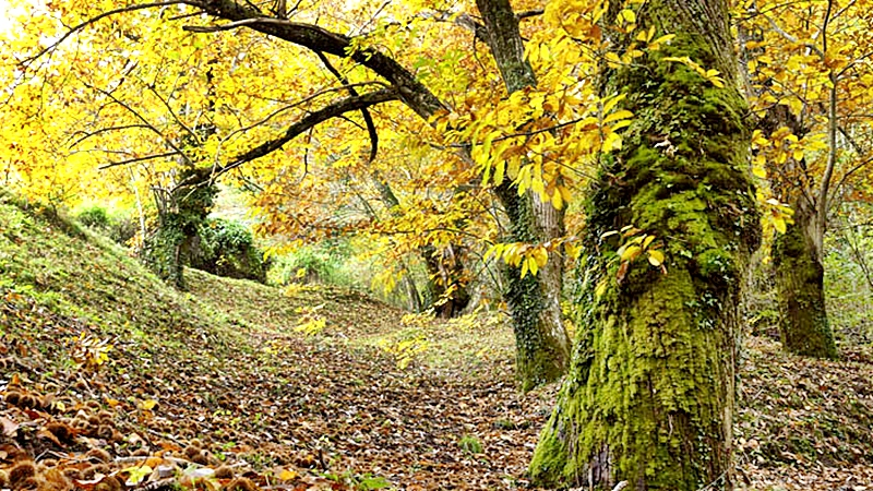 Sierra de O Cuorel, es una sensación de libertad y bondad de la naturaleza