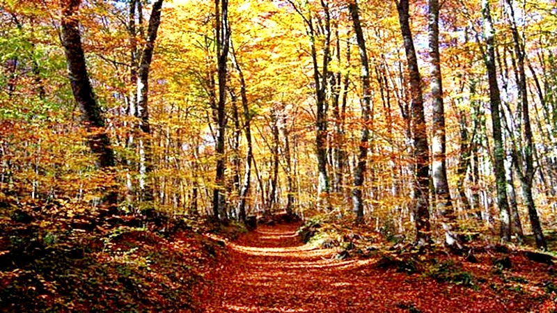España se luce en otoño con sus bosques