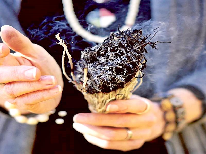 La Salvia como limpiador de ambientes