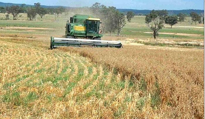 La siembra presenta una gran caída en muchos años