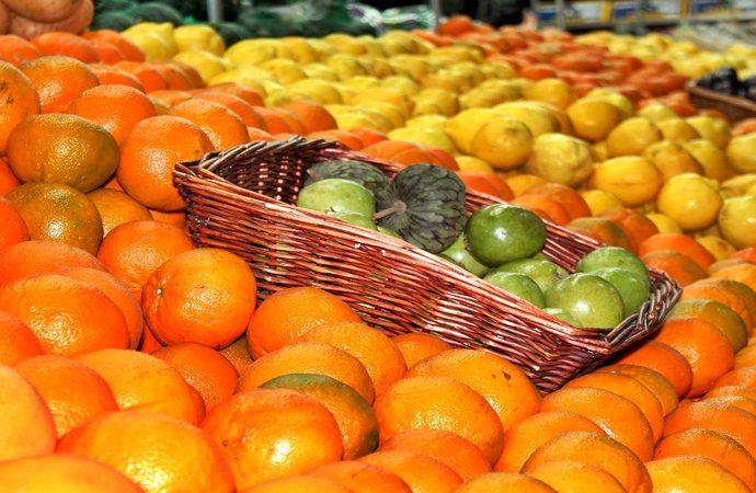 Ha descendido el cultivo de cítricos hasta en un 90%
