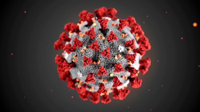 es mutable la informacion genetica del virus y puede adaptarse de acuerdo al entorno progresivamente
